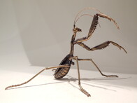 Praying Mantis sculpture by Ken Auton